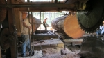 Gregg Hendrix uses a chain saw to cut a path in the log for the upper saw hub to pass.  8/8/2013